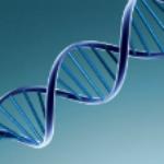 На ДНК планируют записывать данные как на жесткий диск